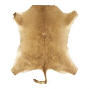 Fur calf brown (bos taurus taurus)