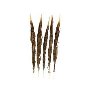 Feather pheasant gold 38cm (5pc.) (chrysolophus pictus)