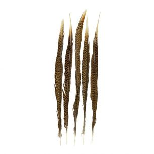 Feather pheasant gold 50cm (5pc.) (chrysolophus pictus)