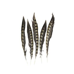 Feather pheasant lady amherst 28cm (5 pc.) (chrysolophus amherstiae)