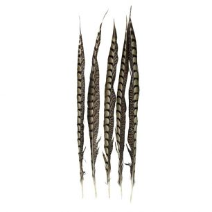 Feather pheasant lady amherst 50cm (5pc.) (chrysolophus amherstiae)