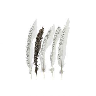 Feather pheasant silver 28cm (5pc.) (lophura nycthemera)