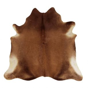 Carpet cow dark brown (bos taurus taurus)