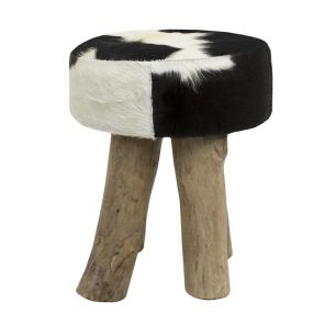 Stool cow black round (bos taurus taurus)